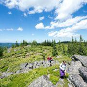 baisoara - buscat - muntele mare cluj