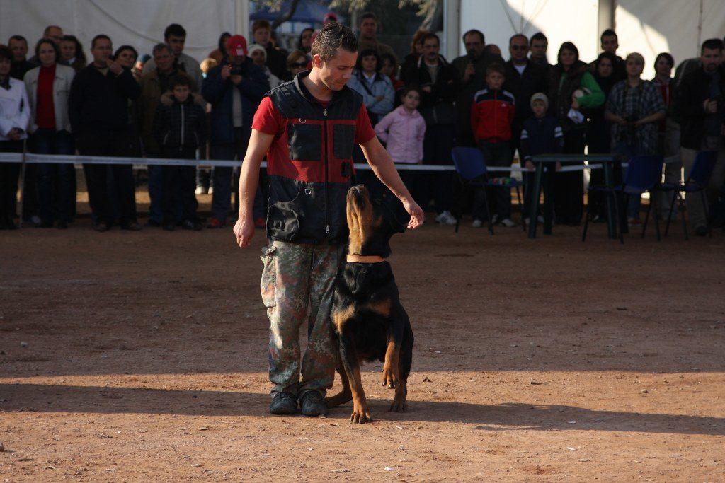 Scoala de dresaj canin k9 nation