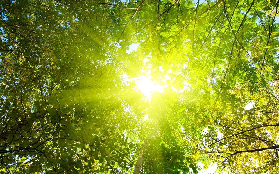 La Roata Făget, mai aproape de natură împreună cu cei dragi grădina de vară