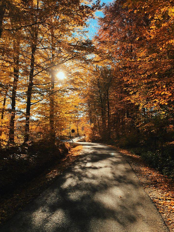 sinele regăsit concurs articole poezii octombrie