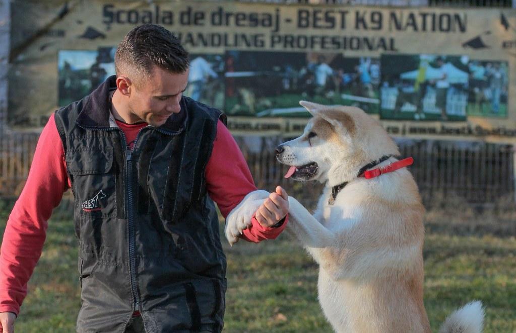 Dresaj canin in Cluj la K9 Nation