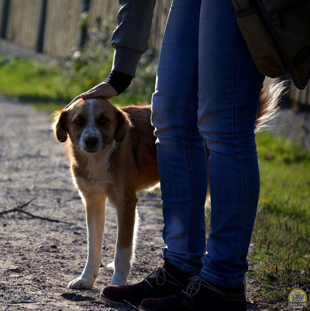 Povești cu oameni și câini prin Moara de Pădure…