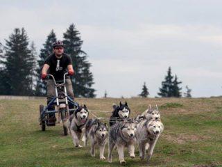 wonderland cluj activități recreative jocuri sanie trasă de câini