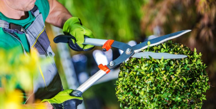Amenajare grădini în Cluj