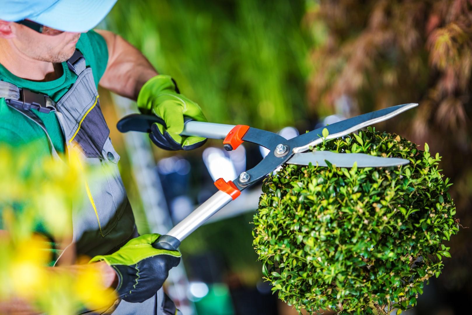 Napoca Garden – amenajare grădini în Cluj | Orașul Verde
