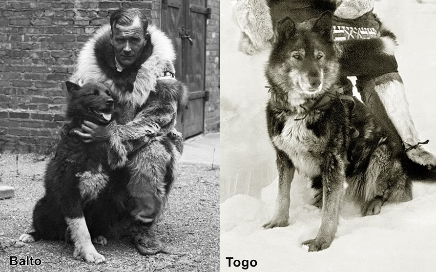 Balto si Togo