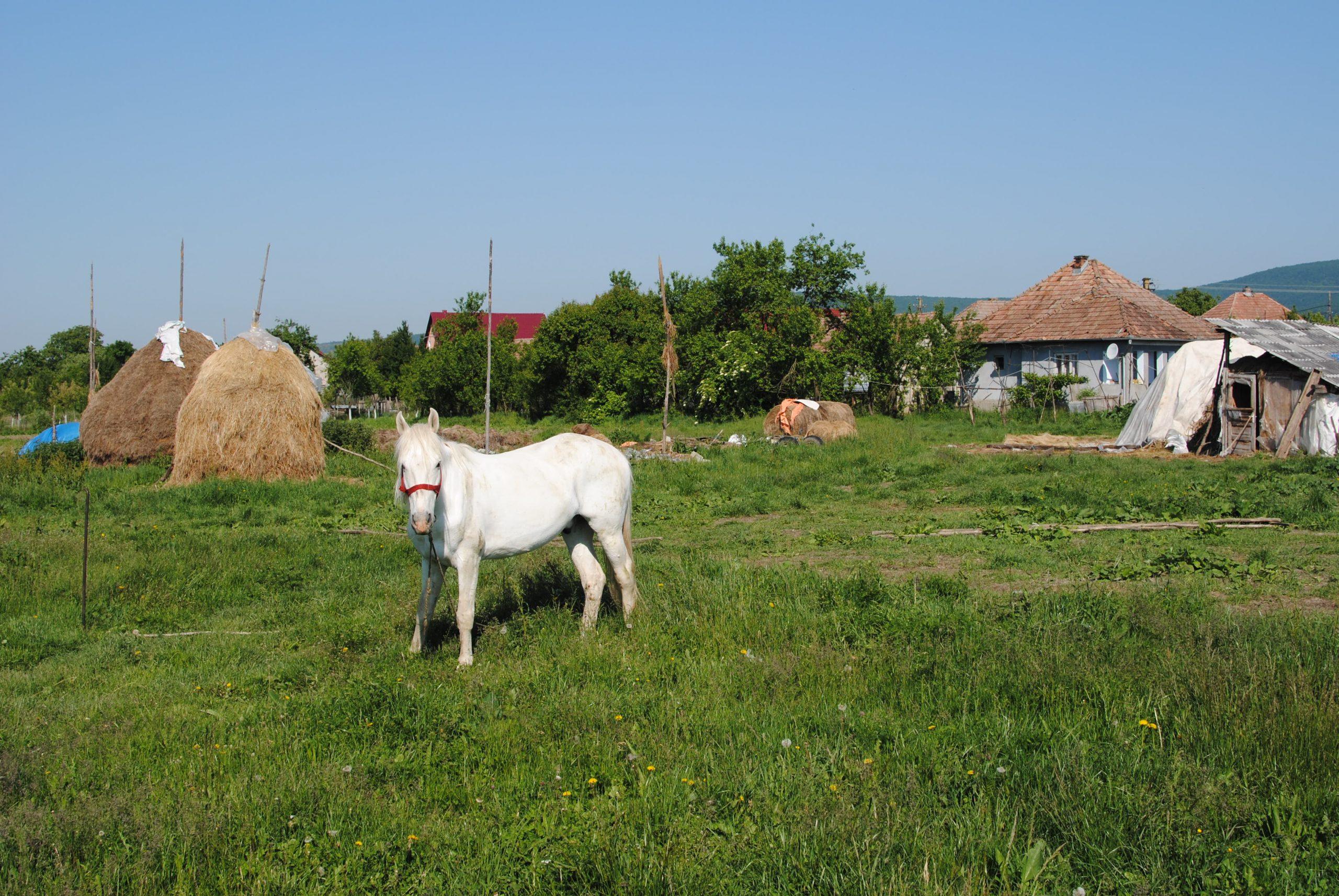 Cal prin Manasturel