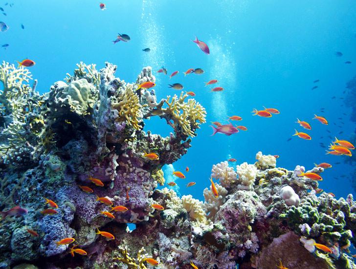 Caribbean-Coral-Reef