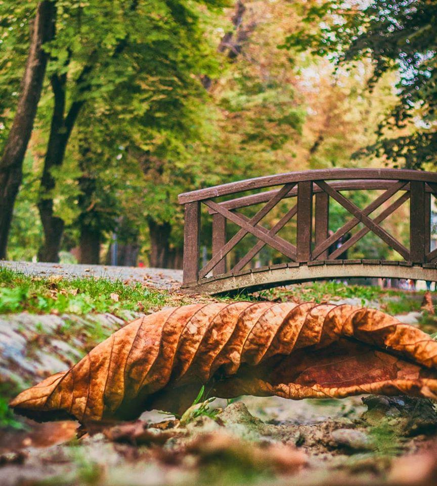Clujul în 13 fotografii de septembrie gebealpar toamna