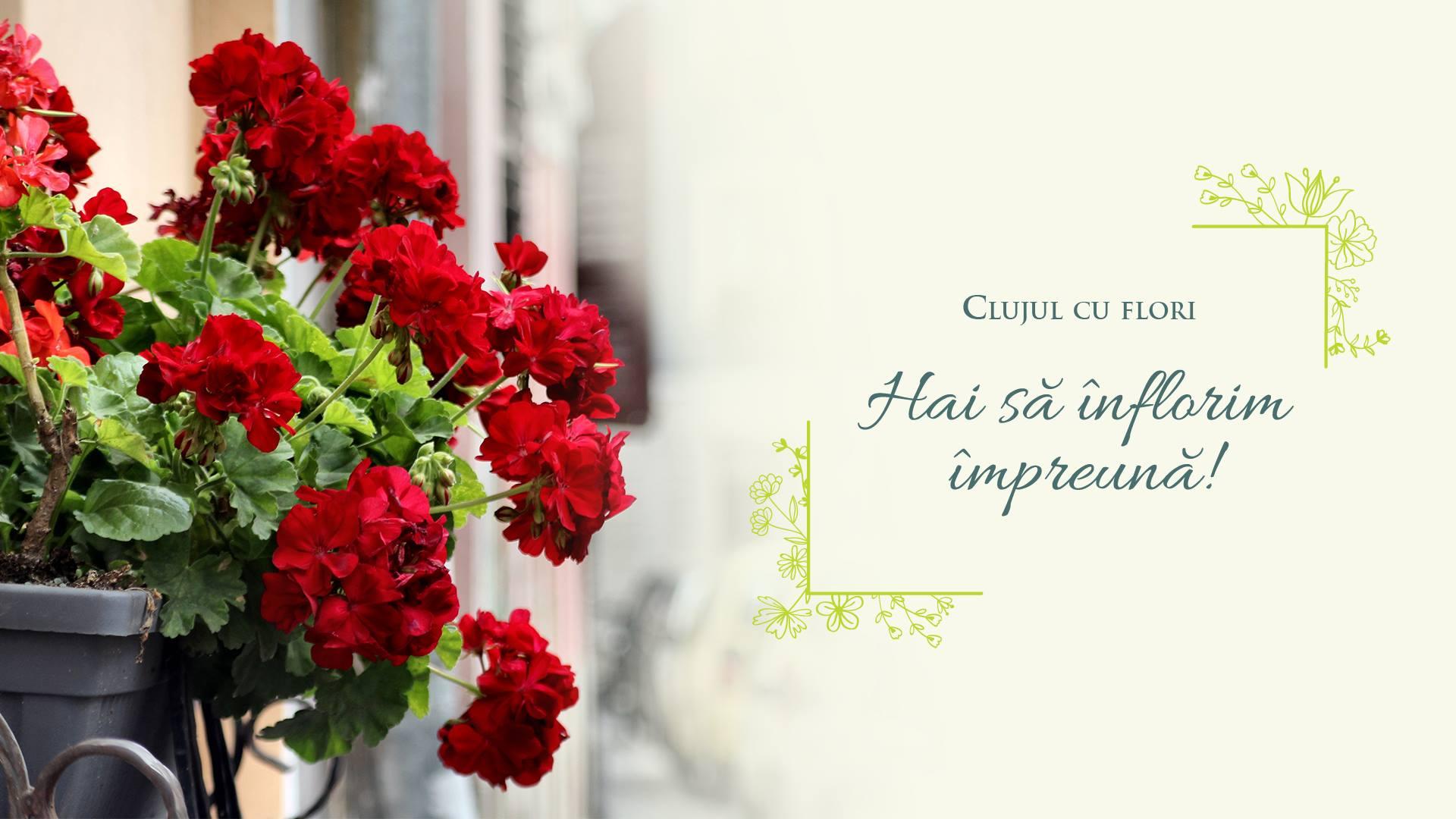 Clujul cu flori 2019