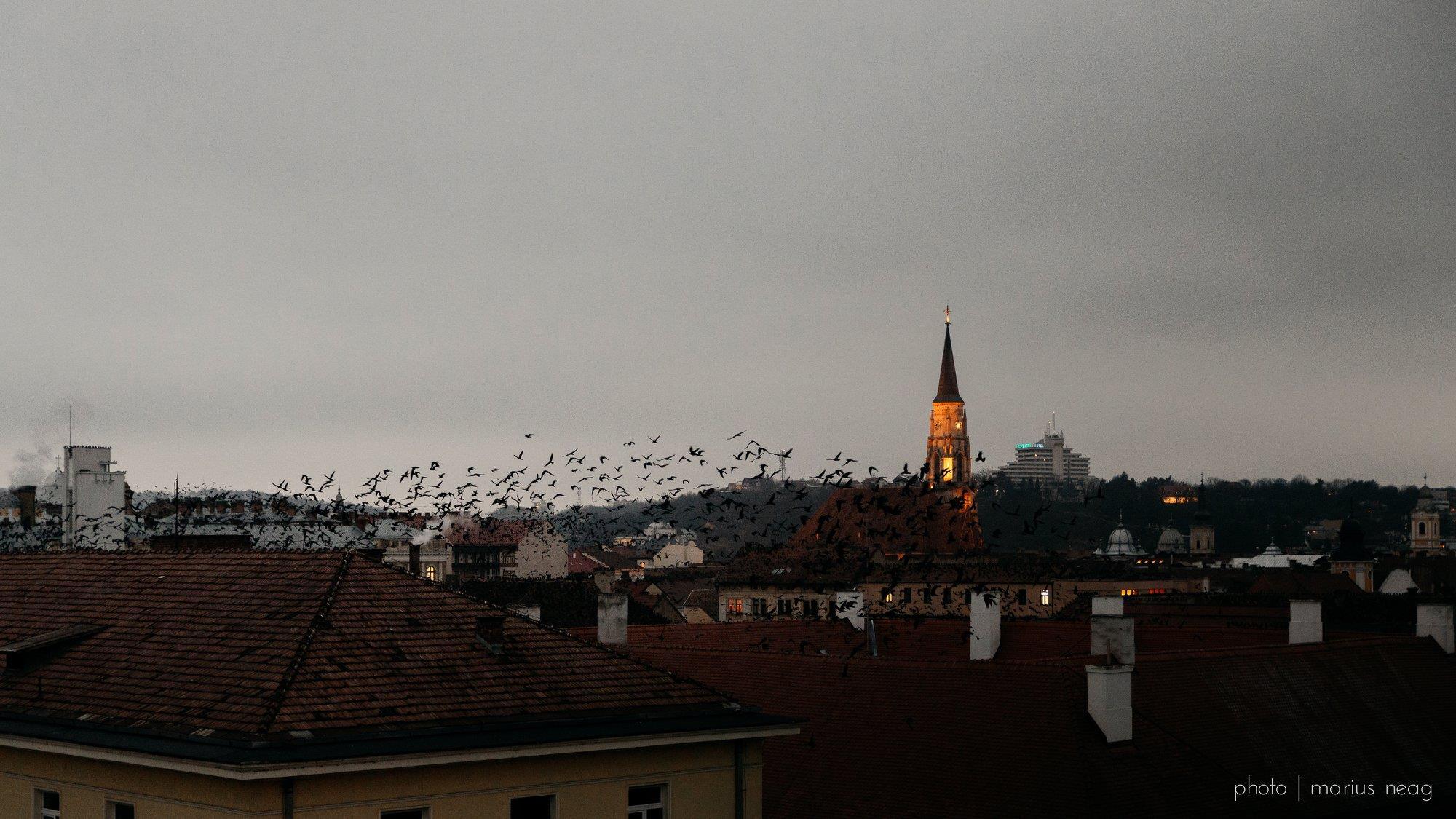 Clujul in 15 fotografii ale lunii februarie (10)