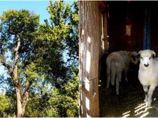 Să cunoaștem satele clujene: o zi în comuna Câțcău