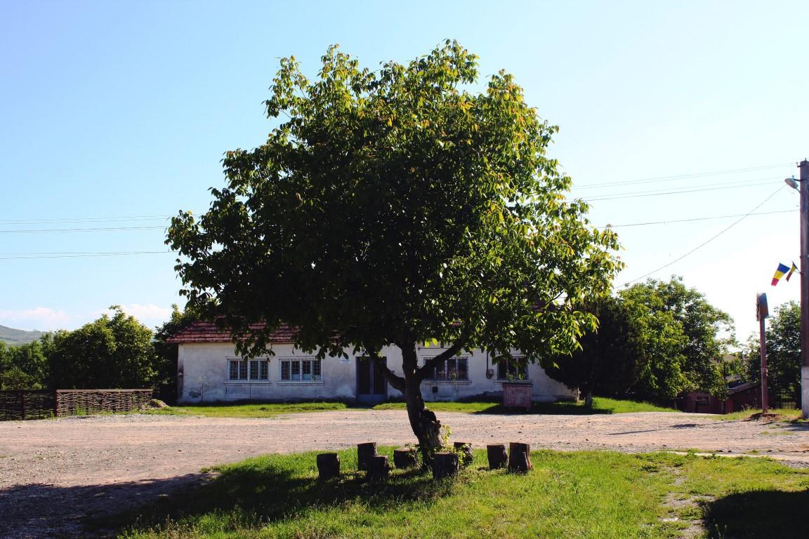 Copac Cuzdrioara Cluj