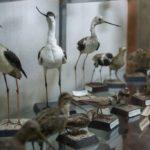 muzeul zoologic cluj