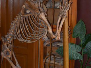 Muzeul de Paleontologie - Stratigrafie-1