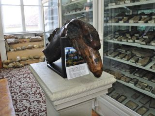 Muzeul de Paleontologie - Stratigrafie-2