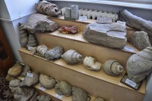 Muzeul de Paleontologie - Stratigrafie-4