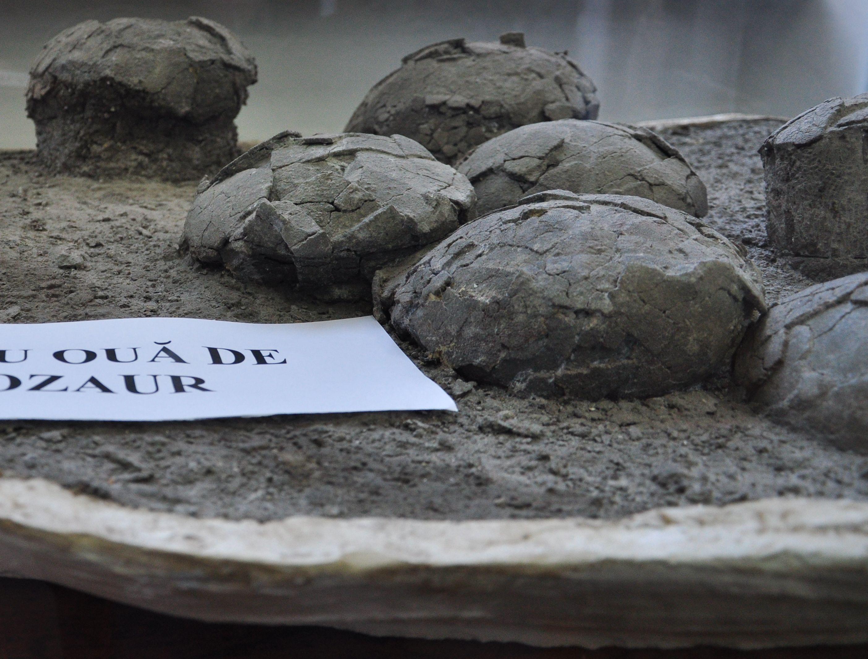 Singurul cuib cu oua de dinozaur din Romania