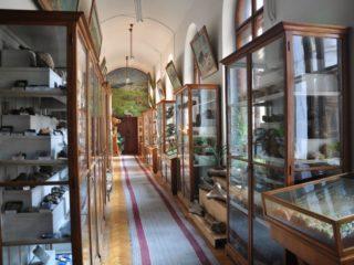 Muzeul de Paleontologie - Stratigrafie-5