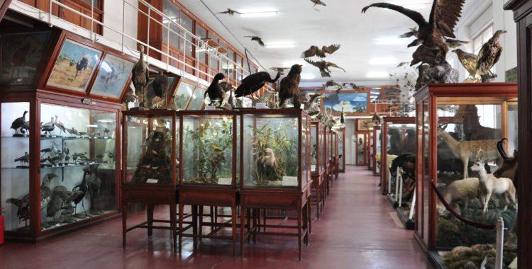 Muzeul Zoologic UBB