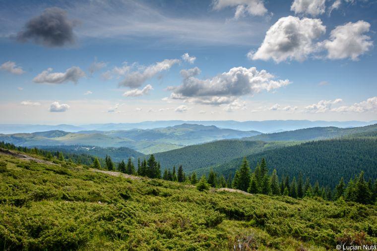 baisoara - buscat - muntele mare