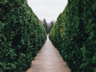 Sfaturile BRONTO: Ce trucuri folosim pentru un gard viu frumos și sănătos?