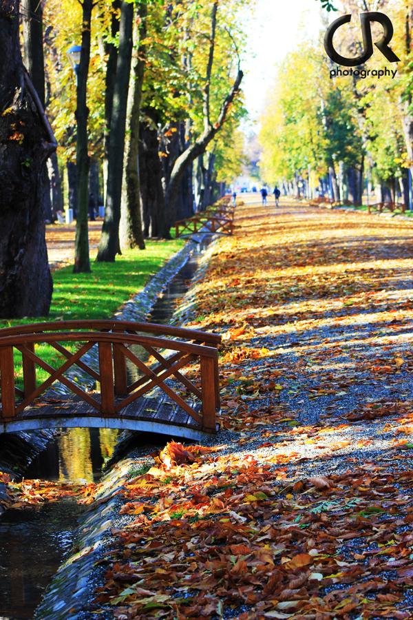 Pulsul orasului Cluj