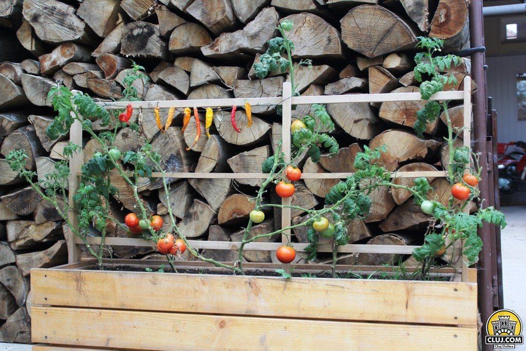 izvoru crisului agricultura mestesuguri artizanat cluj