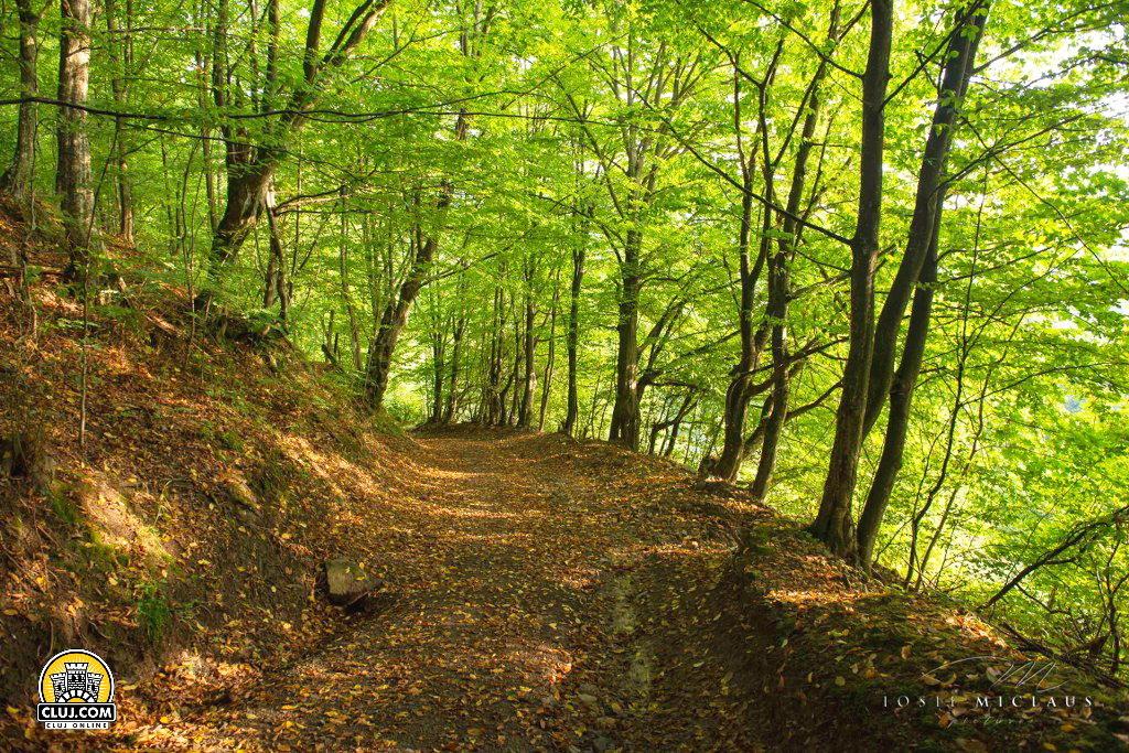 Valea Draganului, comuna Poieni, judetul Cluj
