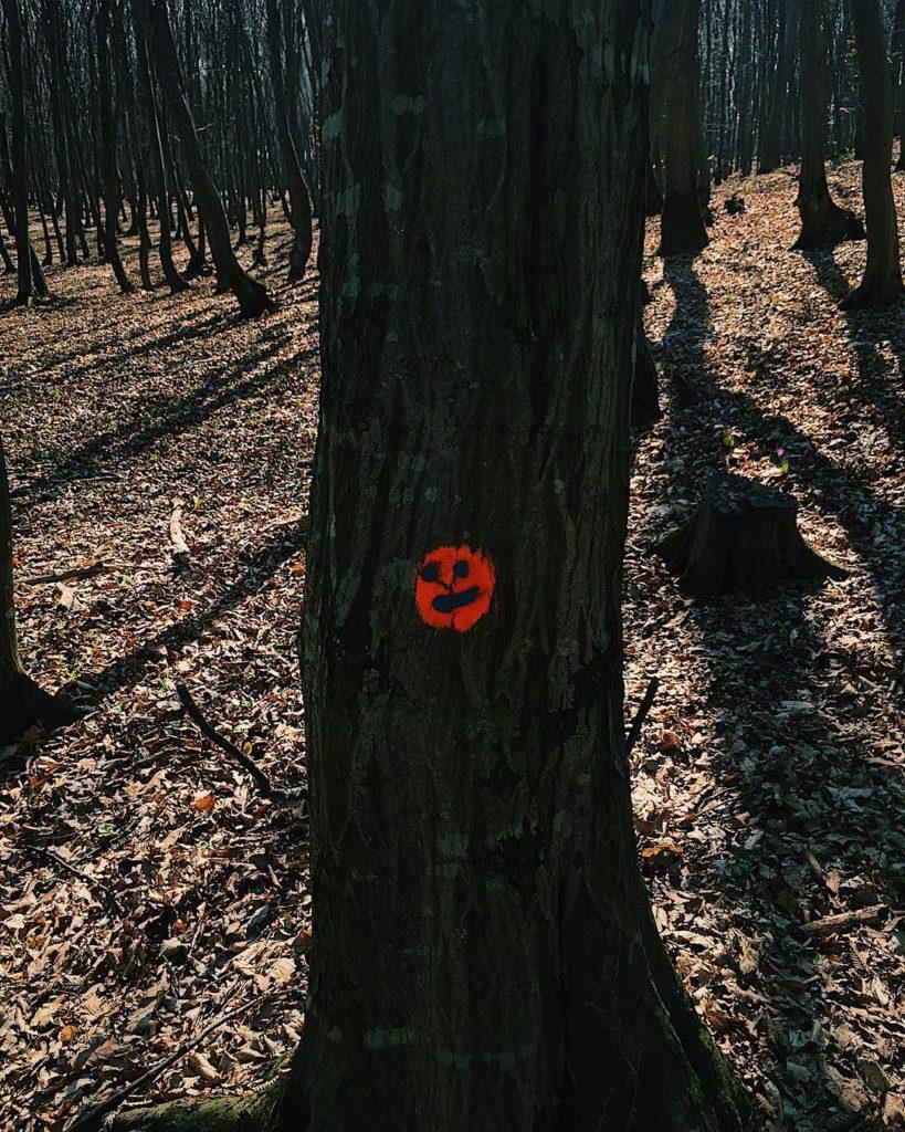 La pas prin Făget, urmărind zâmbetele copacilor (1)