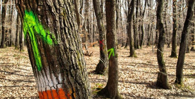 La pas prin Făget, urmărind zâmbetele copacilor (3)