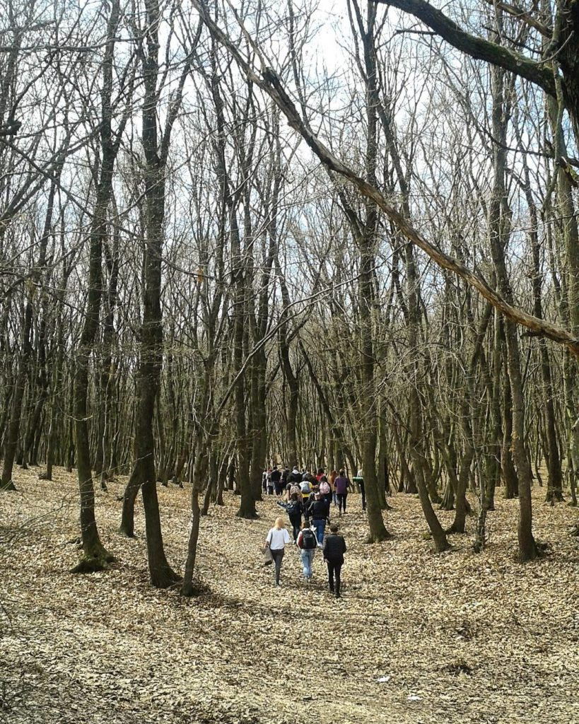 La pas prin Făget, urmărind zâmbetele copacilor (5)