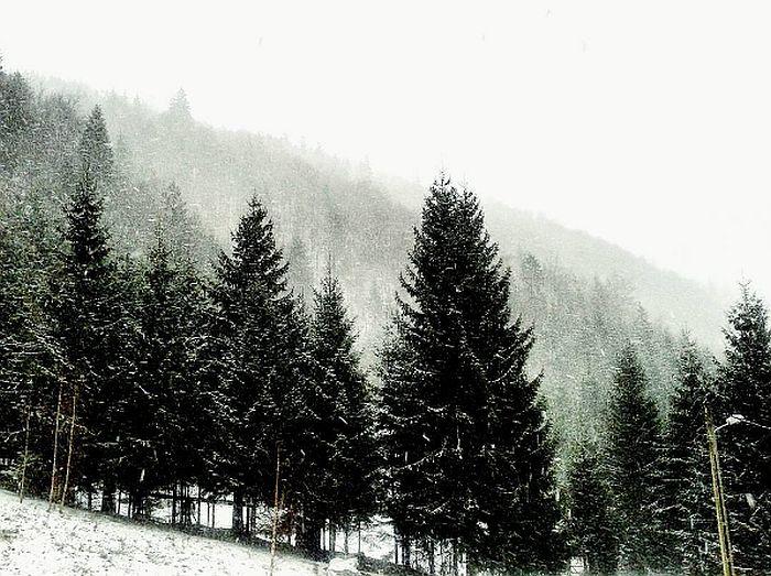 La pas prin Măguri Răcătău Cluj (8)
