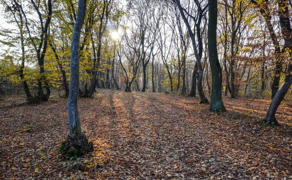 Locuri bântuite în Cluj Pădurea Hoia-Baciu