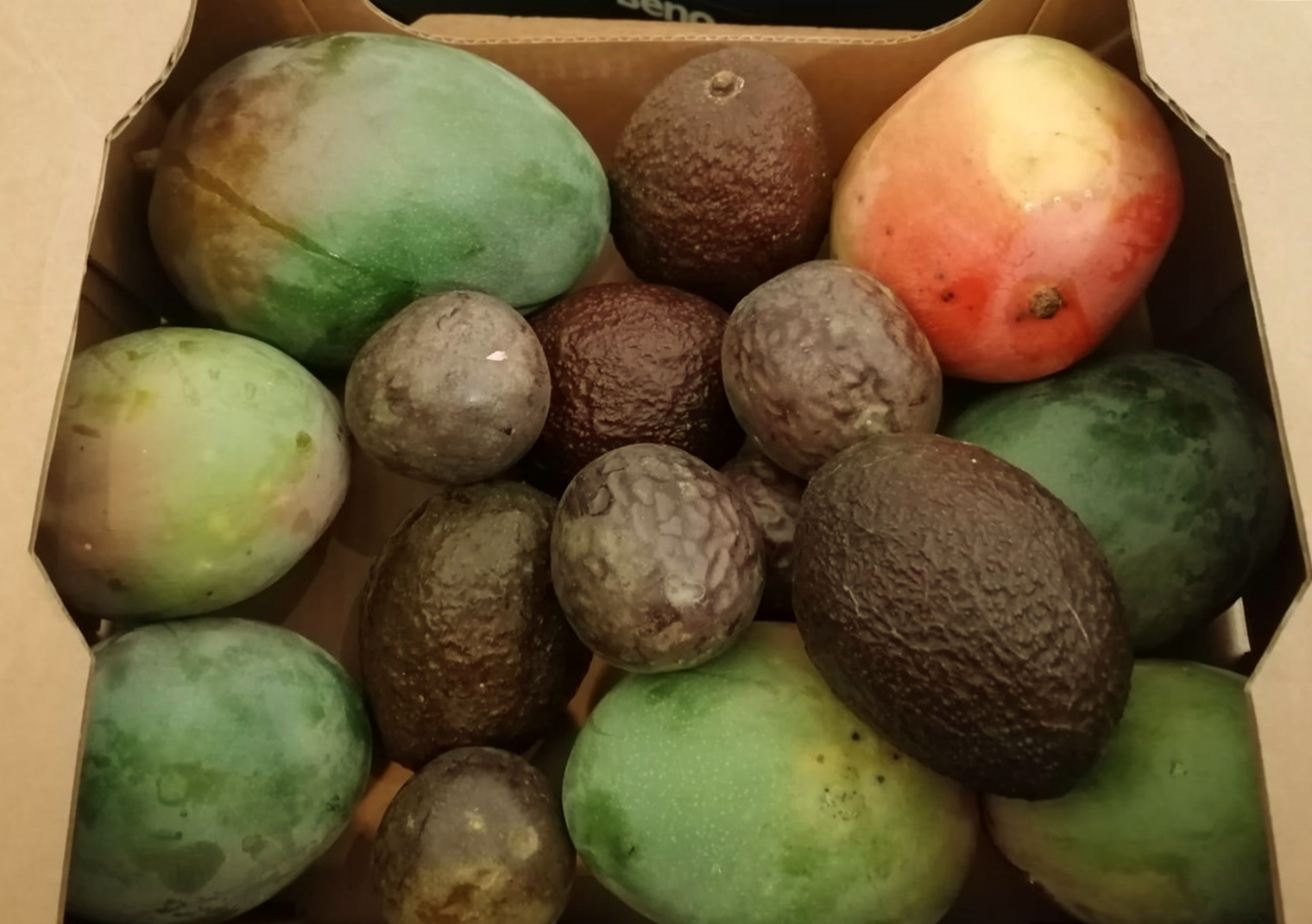 Mango People Magic Box