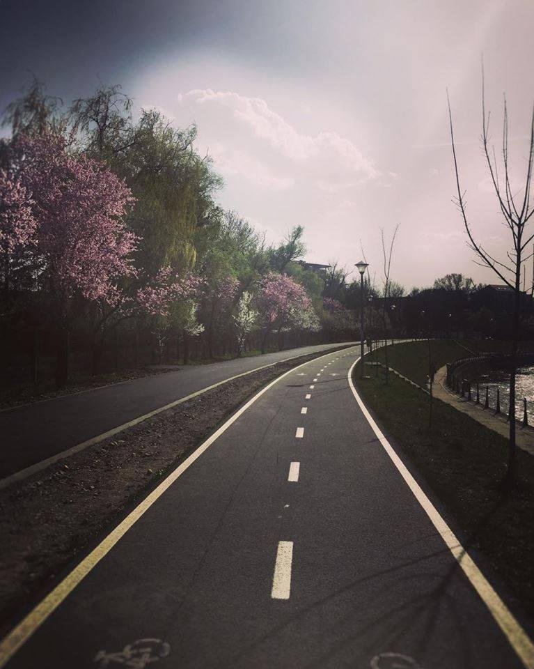 Primăverile la Cluj