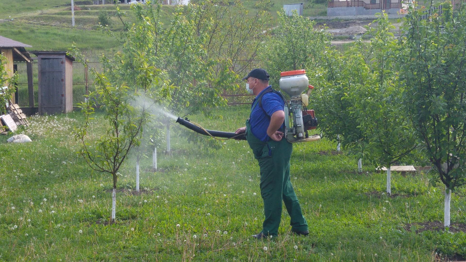 Napoca Garden Cluj