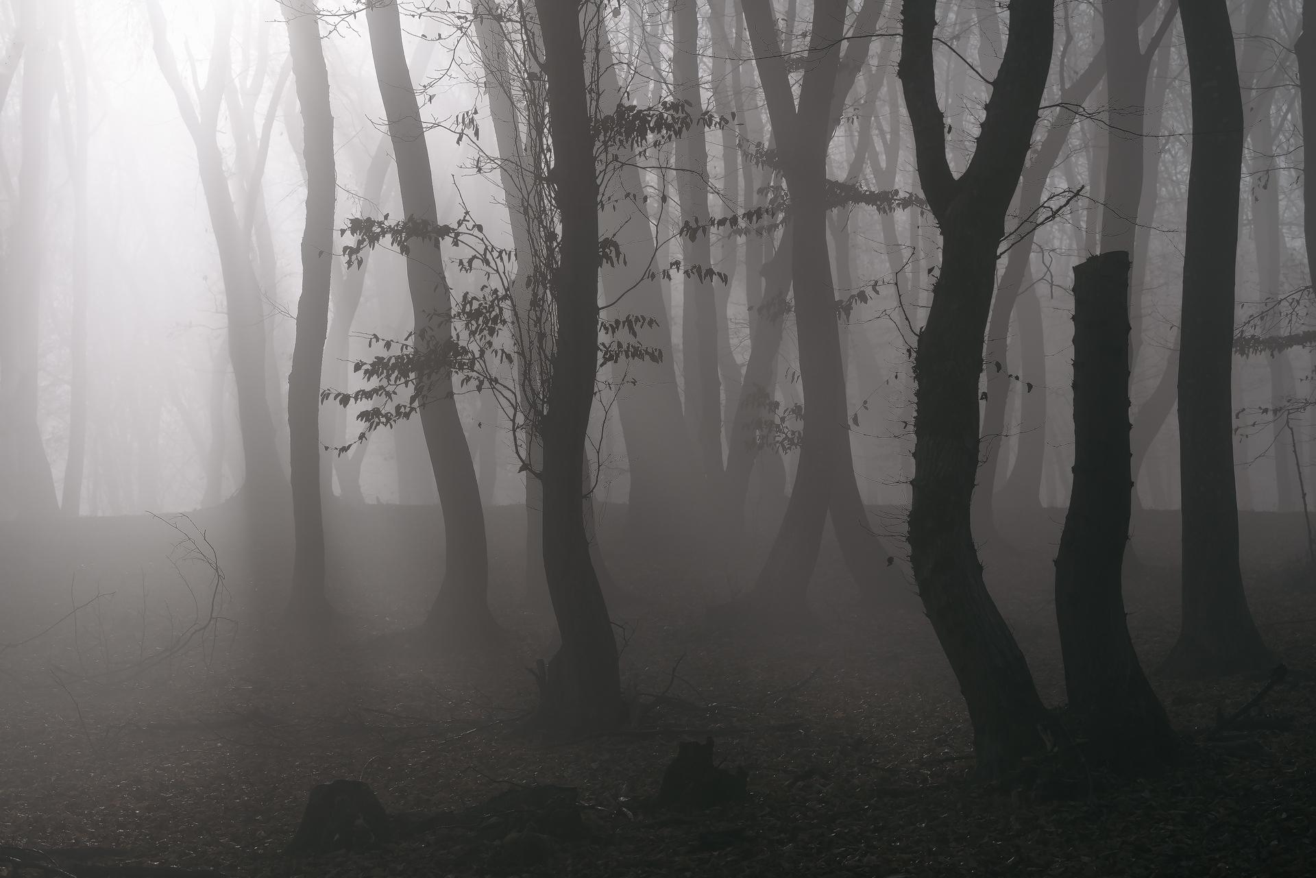 Pădurea Hoia Baciu Daniel Mîrlea (1)