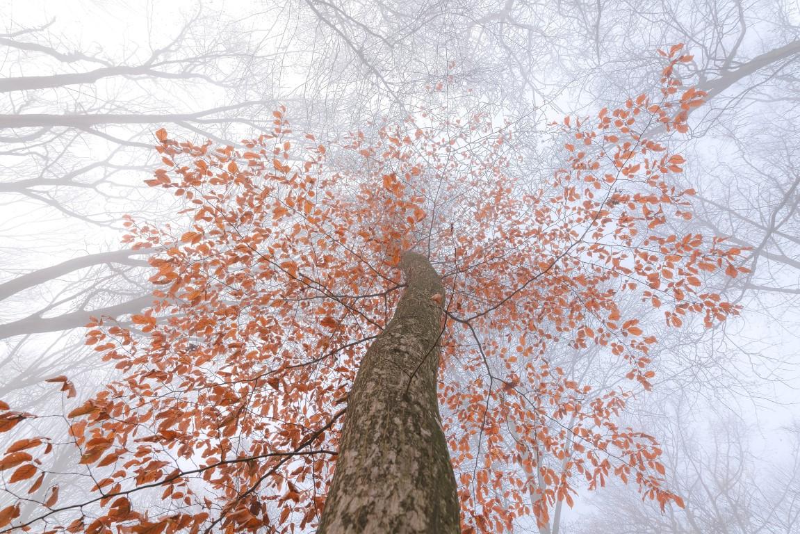 Pădurea Hoia Baciu Daniel Mîrlea (3)