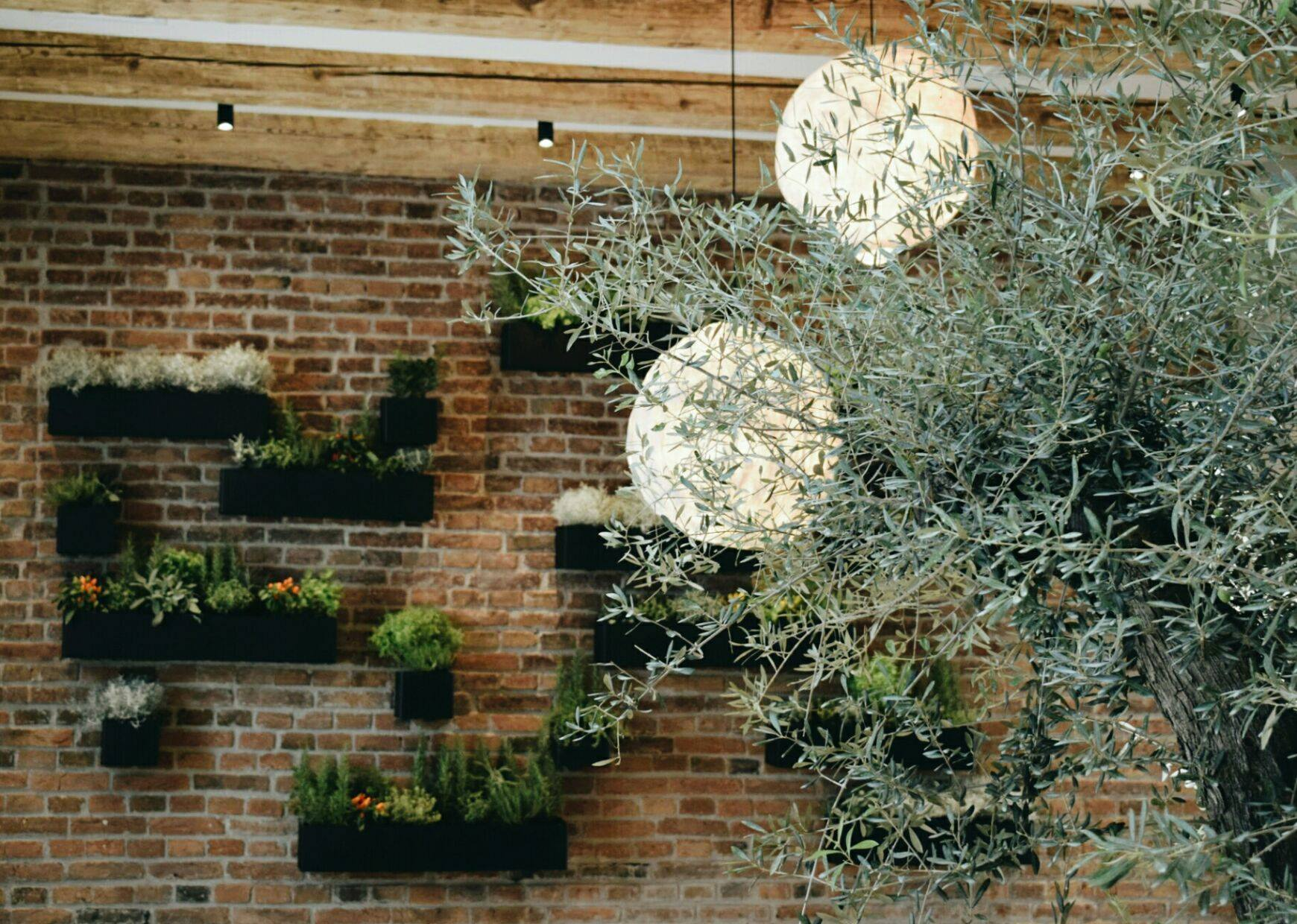 Samsara Foodhouse Cluj: noua adresă și câteva recomandări pentru gurmanzi