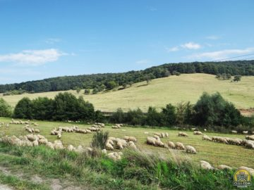 Satul Arghișu, comuna Aghireșu, județ Cluj, CVA