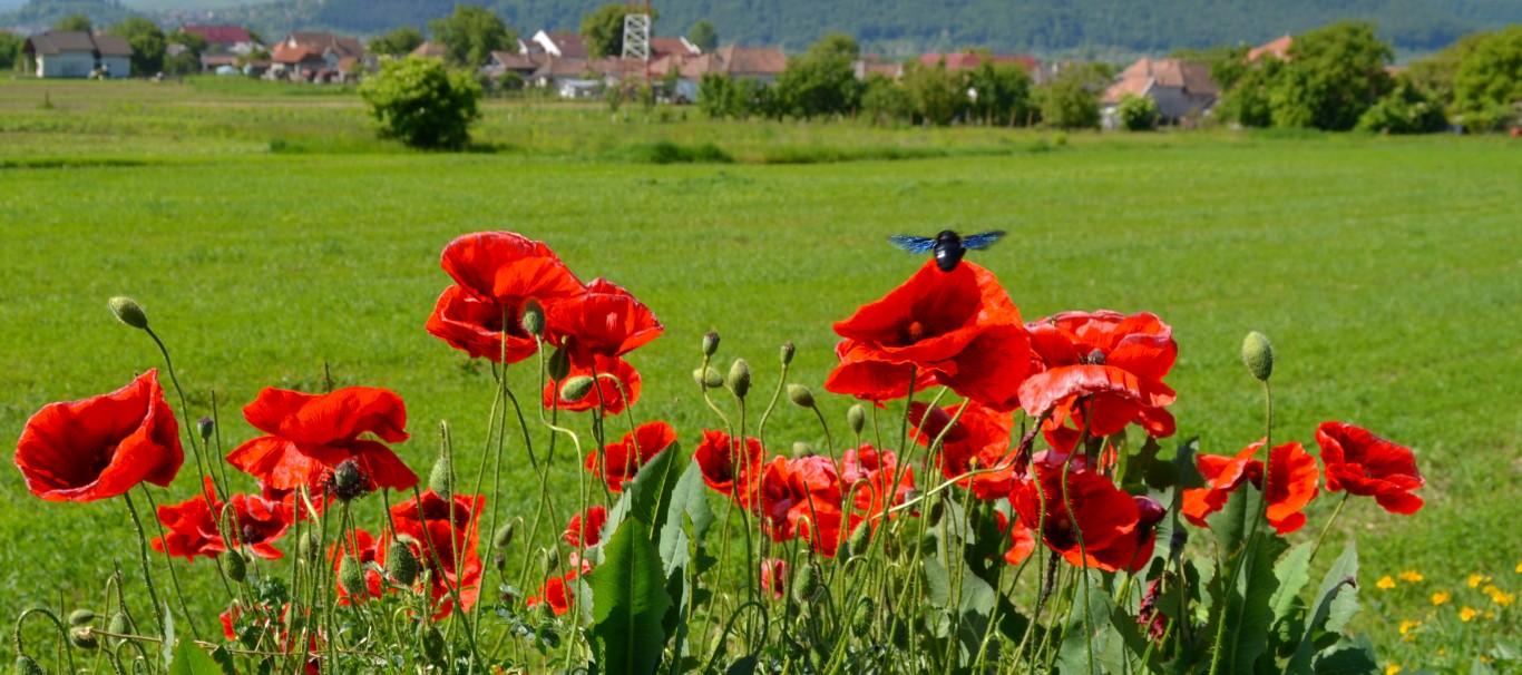Satul Urisor Cluj (Medium)