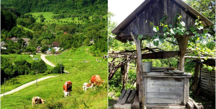Un sat la umbra nucilor batrani - Custura Cluj