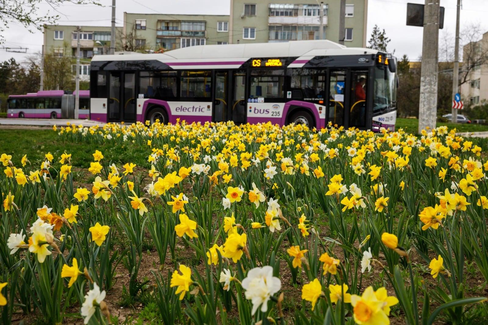 Vinerea Verde Cluj - Transport Public Gratuit (3)
