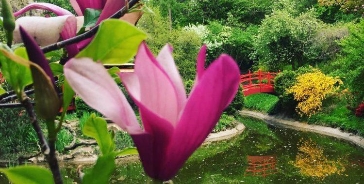 Grădina cu grădini - oazele din oraș