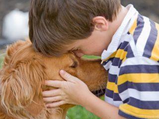 Cel mai bun prieten al omului | Povești despre iubire, curaj și devotament