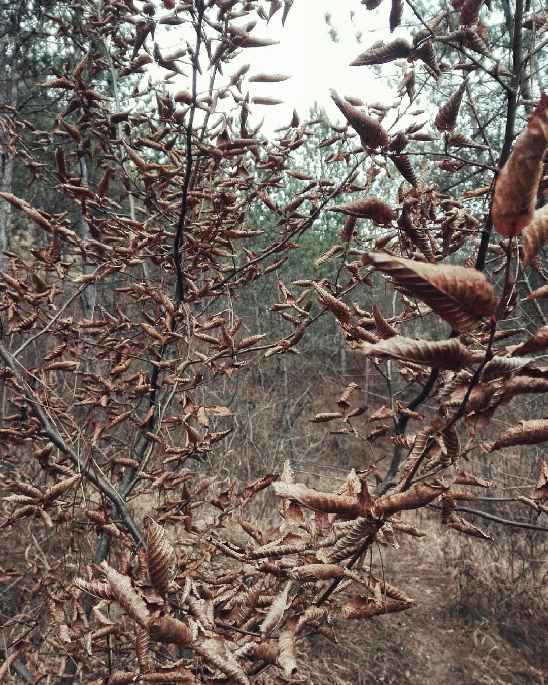 frunze copac