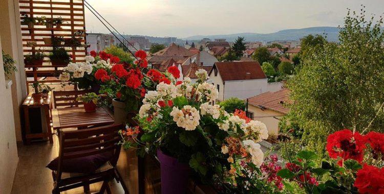 Clujul cu Flori și-a anunțat câștigătorii: cele mai frumoase ferestre, fațade și balcoane înflorate ale Clujului