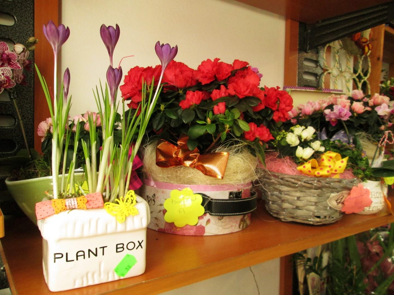 cresc flori din betoanele clujului (5) (Large)
