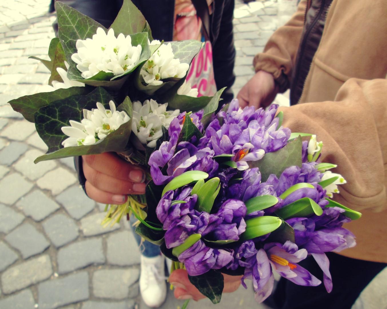 cresc flori din betoanele clujului (8) (Large)